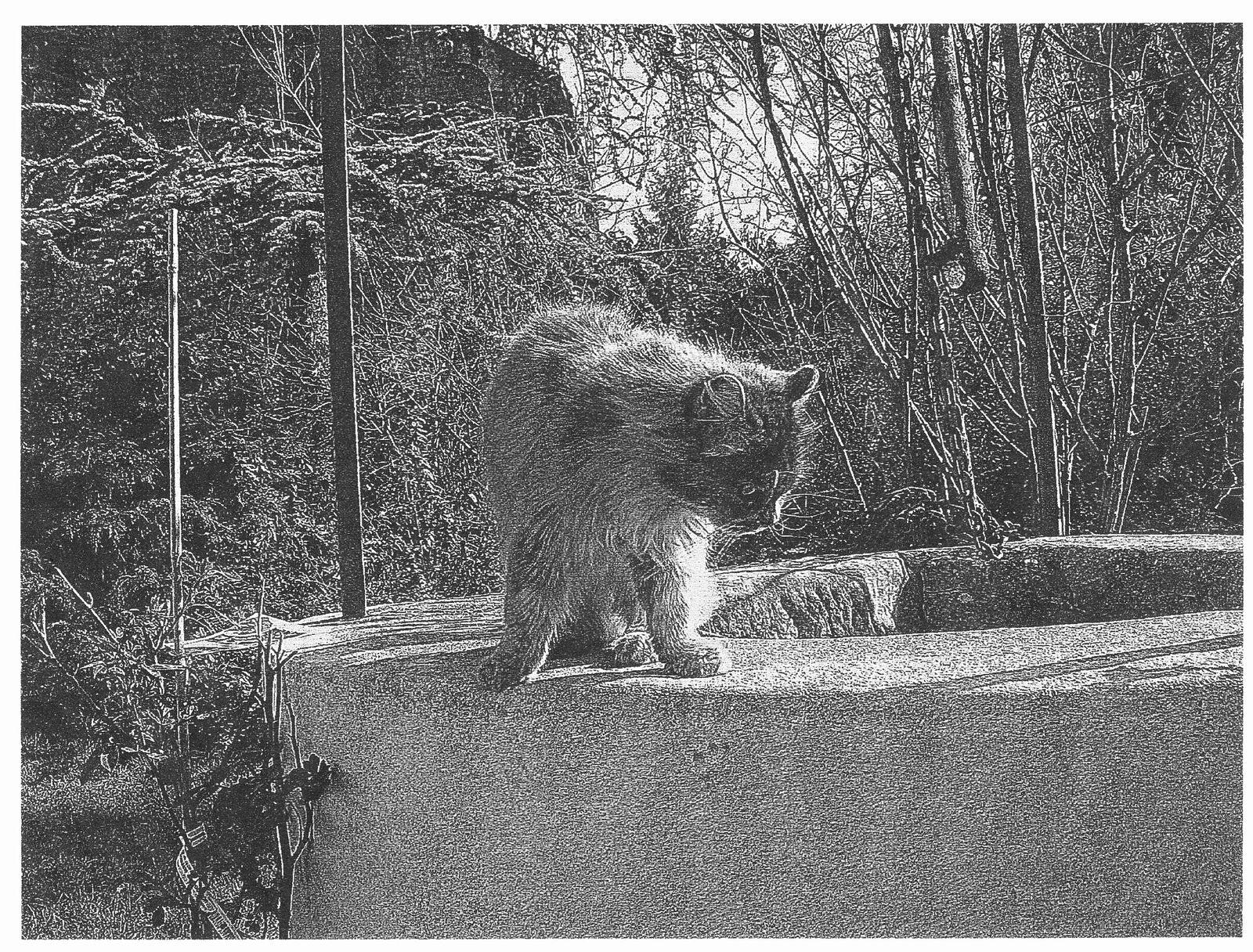Intermède poétique &quot&#x3B;Les chats ne meurent pas&quot&#x3B;...