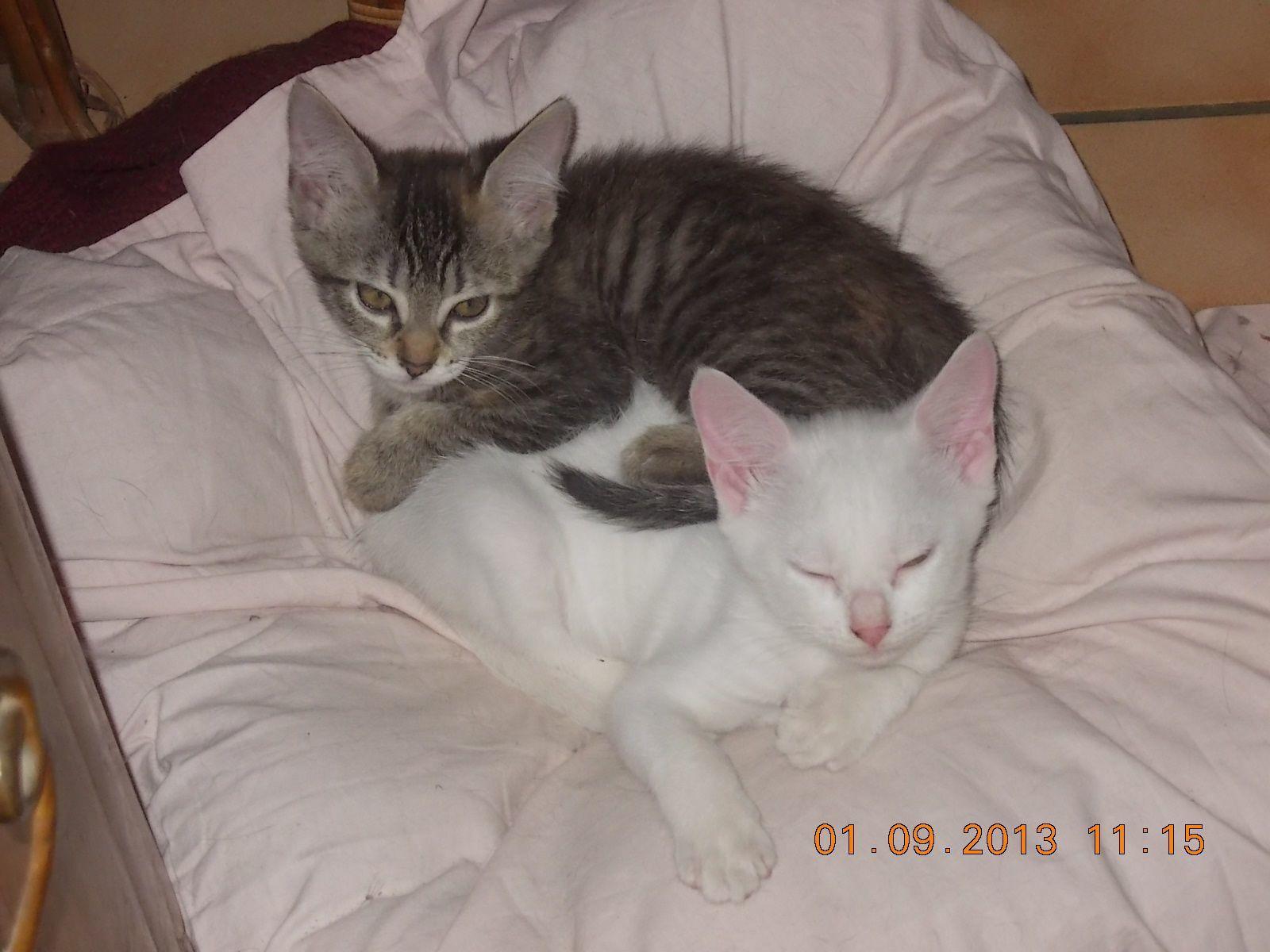 Idylle et Icare : une vie de chats nantis !