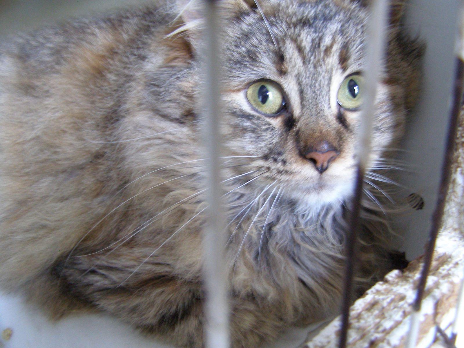 Mâle ? Femelle ? à première vue je dirais jeune chatte... nous en saurons plus demain !