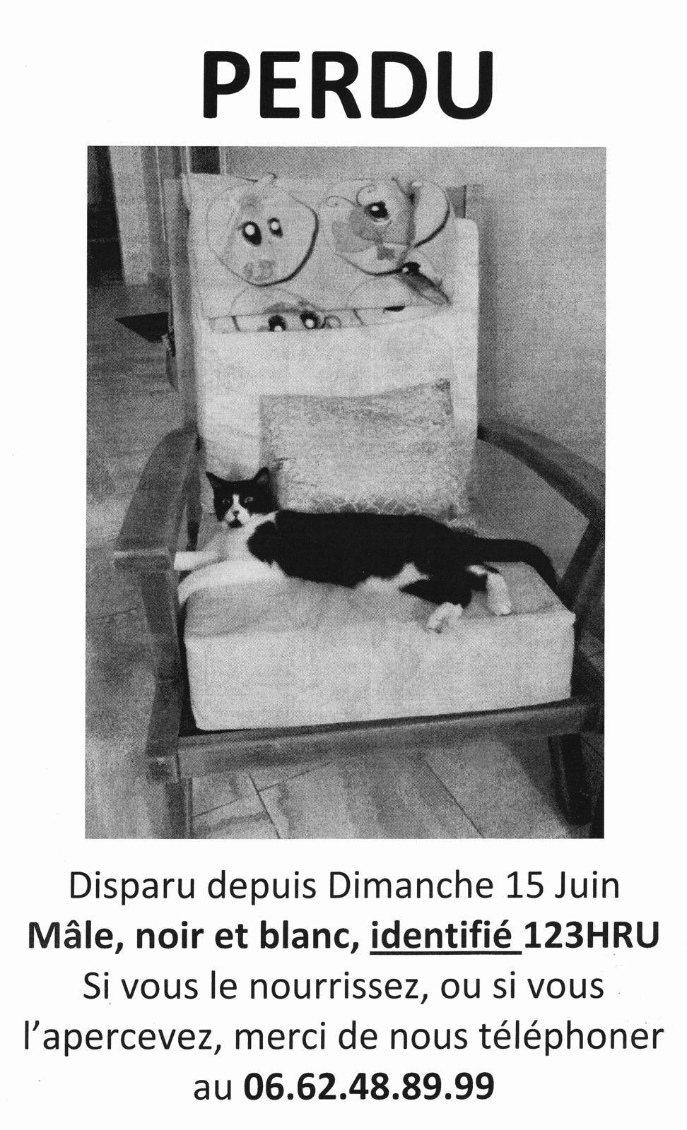 MALEY - Nouvelle disparition d'un chat en Essonne !