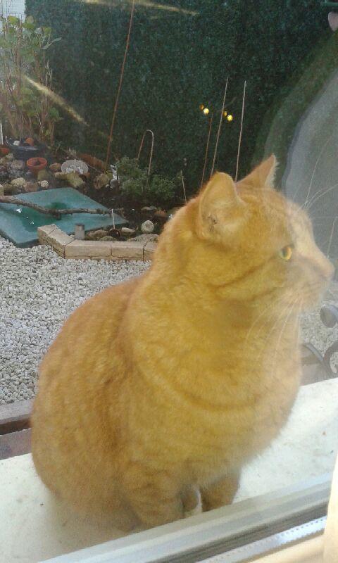Et si vous adoptiez un chat roux pour Noël ?