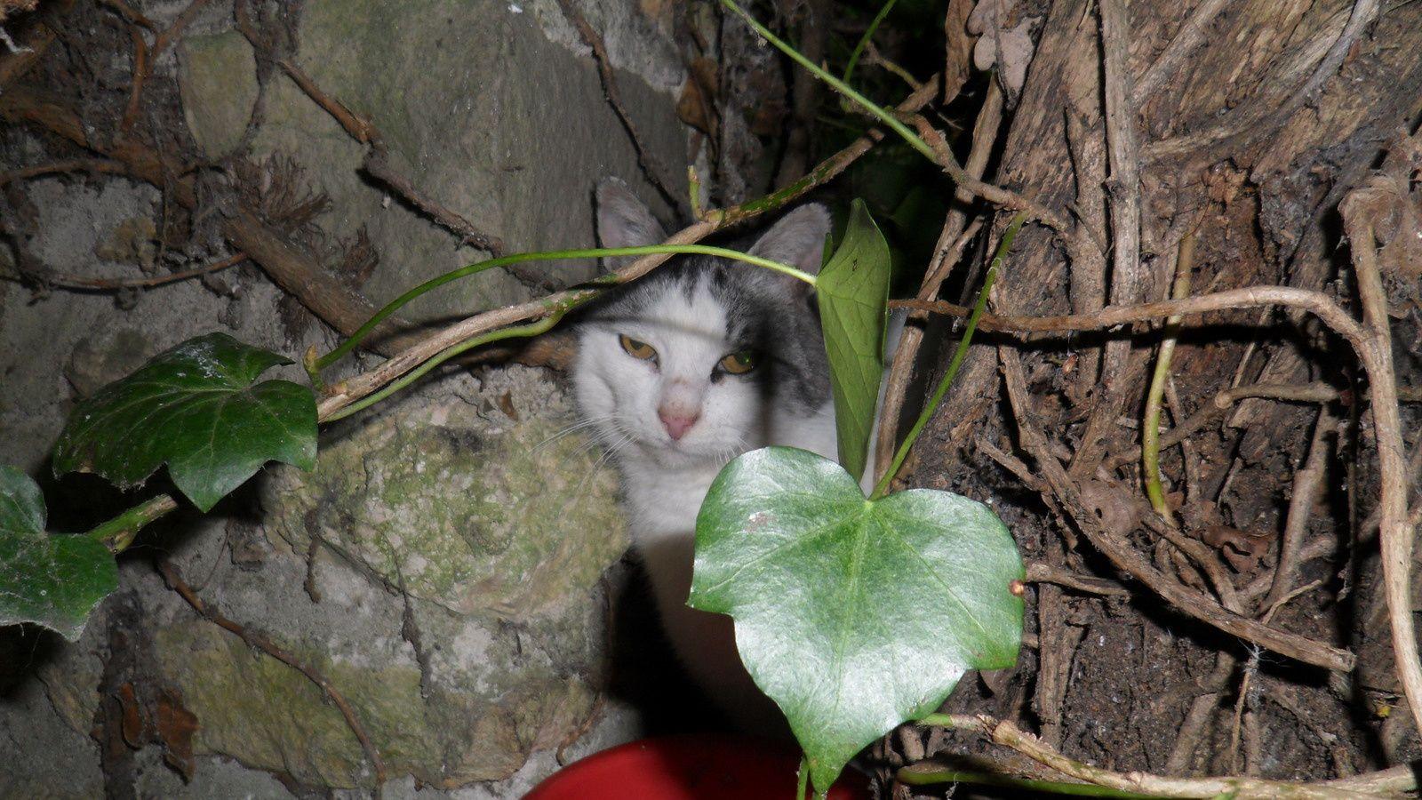 Ah ... qu'y-a-t-il de mieux qu'un coin de jardin ? Attends ma belle... tu vas peut-être le découvrir !