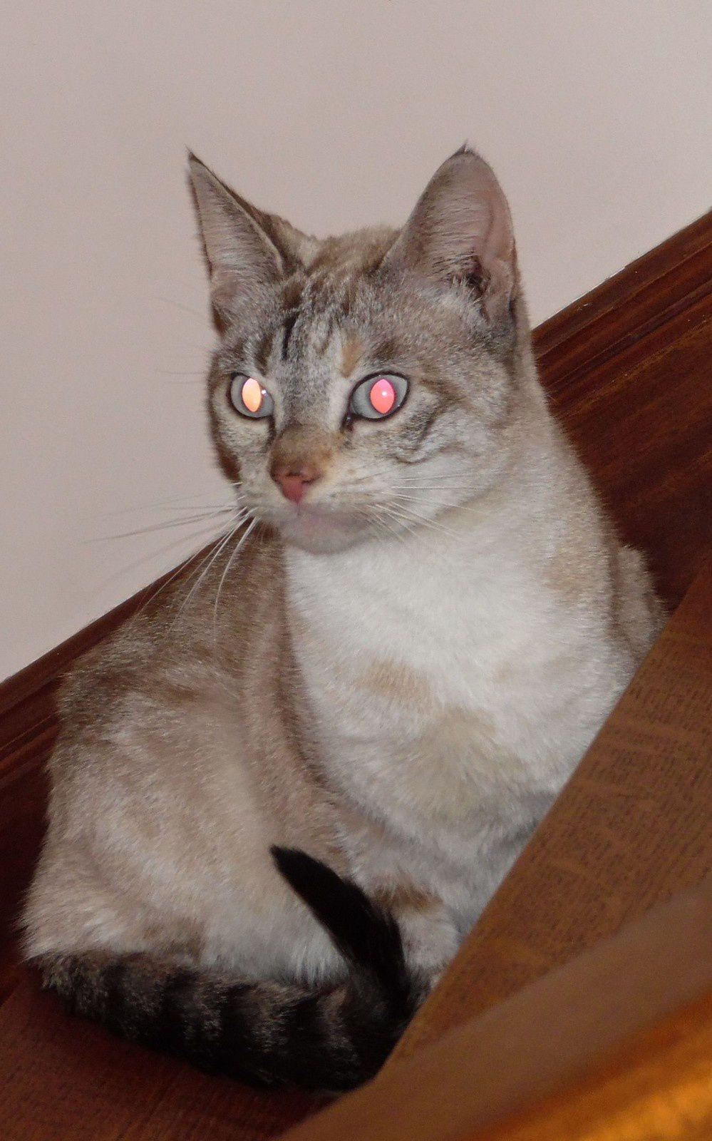 Voici THALIA dont l'âge estimé est d'environ 8 ans- Non elle n'a pas les yeux qui s'allument ...