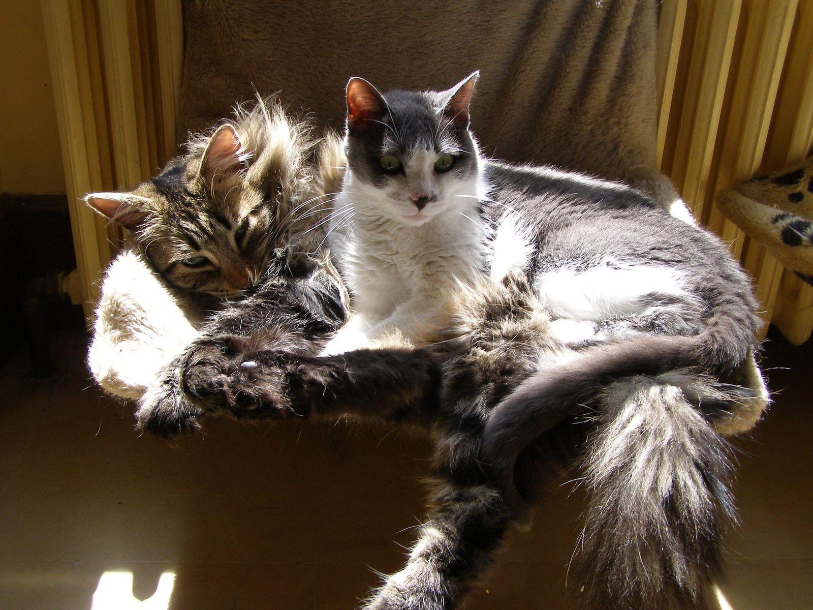 C'est parfois un peu difficile la vie de chat !