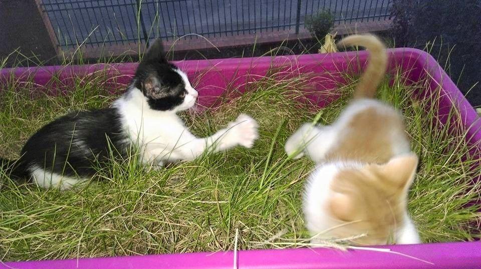 Tout le confort et même un grand bac pour fouler l'herbe à chat !
