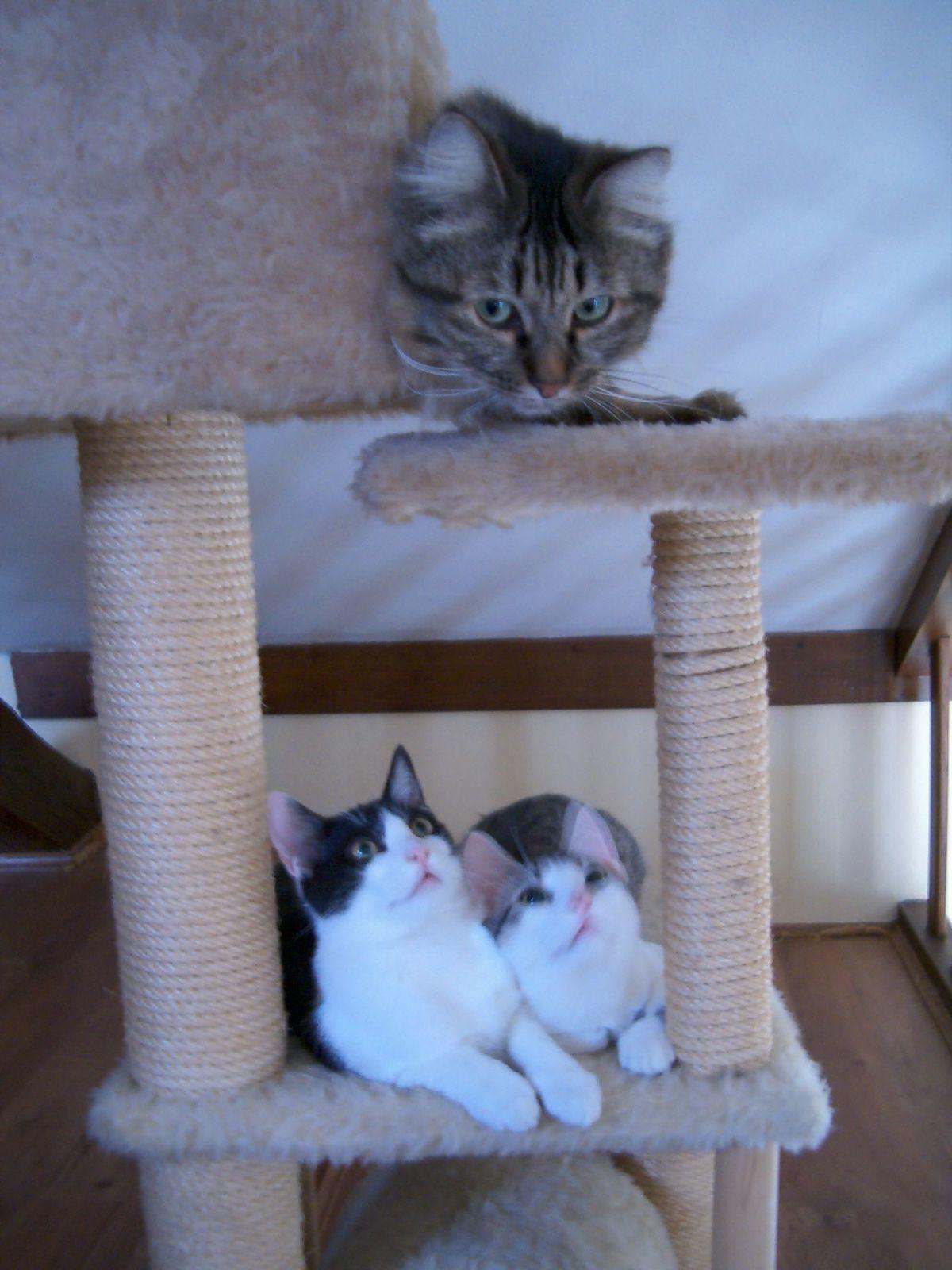 LÉO et les chatons ...