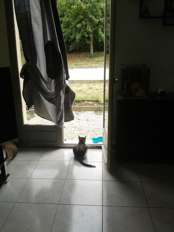 Elle joue les chiens de garde pour empêcher les autres chats d'entrer dans la maison !