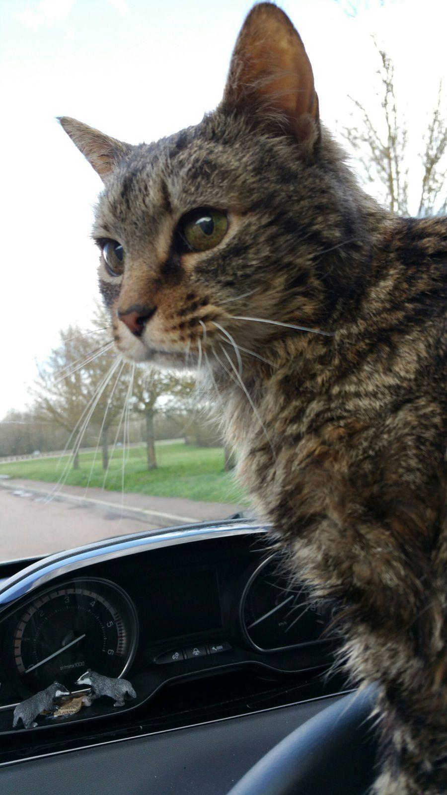 Courte pause dans la voiture de Nathalie pour changer l'alèse de Tsuki, bien agitée et inquiète ...