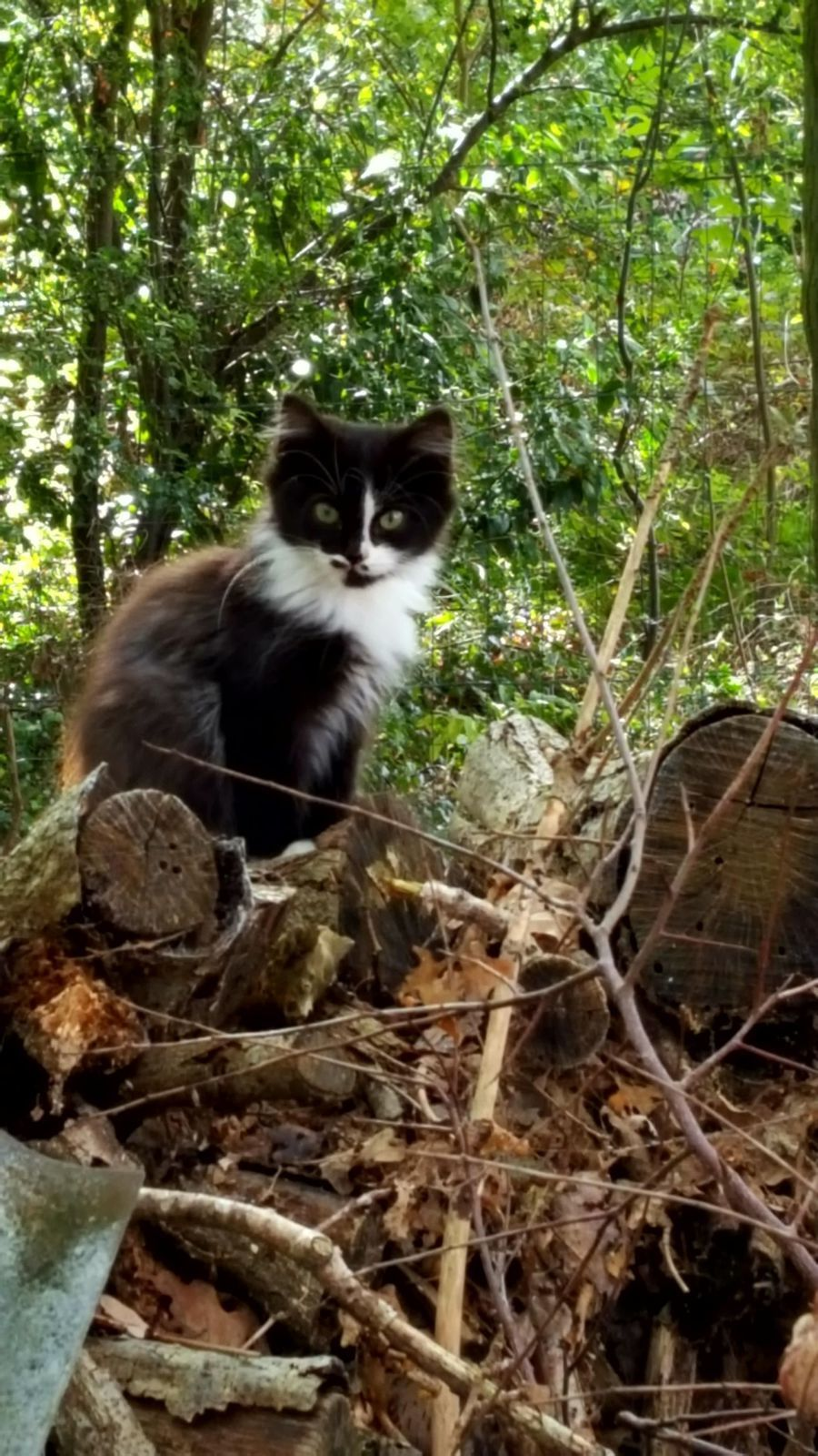 A ADOPTER : 2 jolies petites chattes
