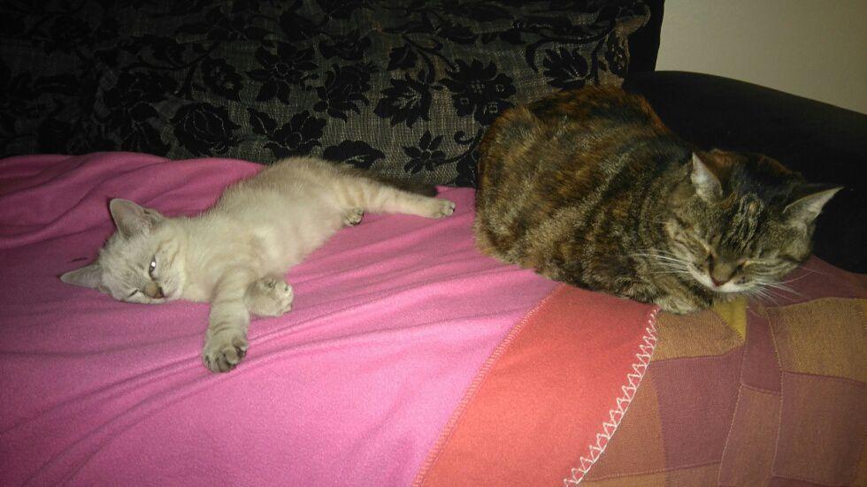 Mousseline avec Popeye, très à l'aise dans sa nouvelle famille