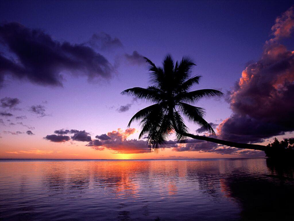 Bon voyage à vous tous qui s'en vont autre - mer pour le beau soleil d'hiver profitez en.
