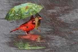 Après  cette grosse chaleur d'Été  l'Autômne avance lentement sur le toit de notre planète qui veut dire sortir vos bottes, manteau de pluie, le parapluie en suite on attend sur le piste.