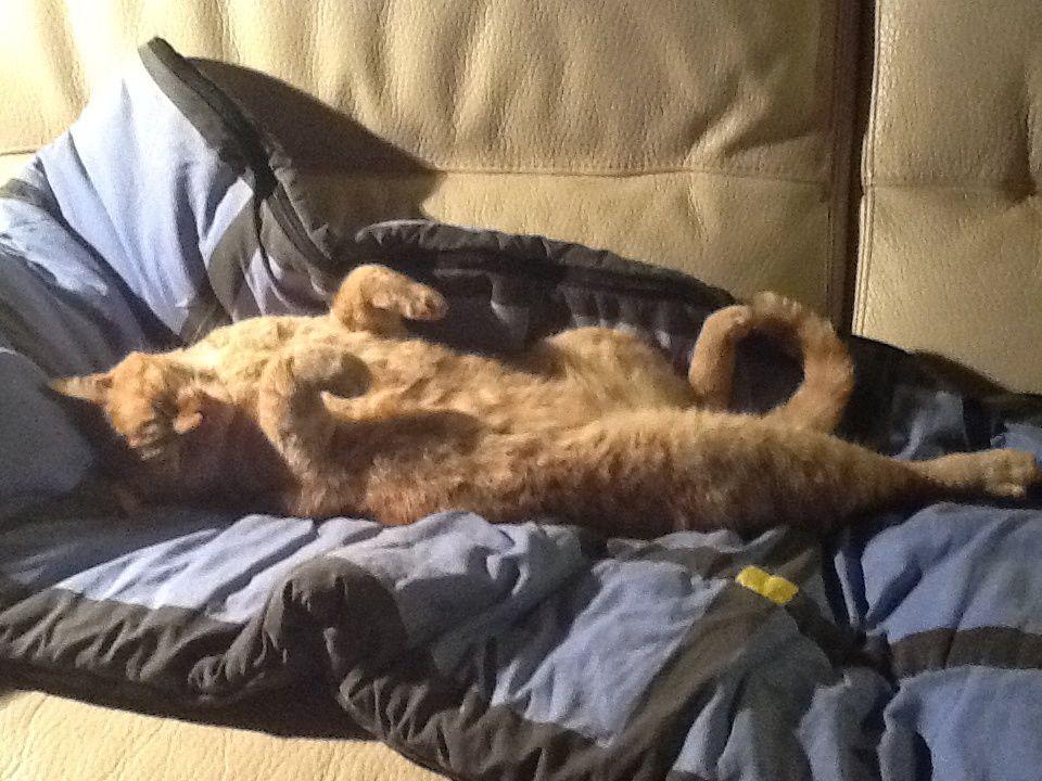 Après un tel effort, un repos bien mérité. Moi je veux être un chat.....