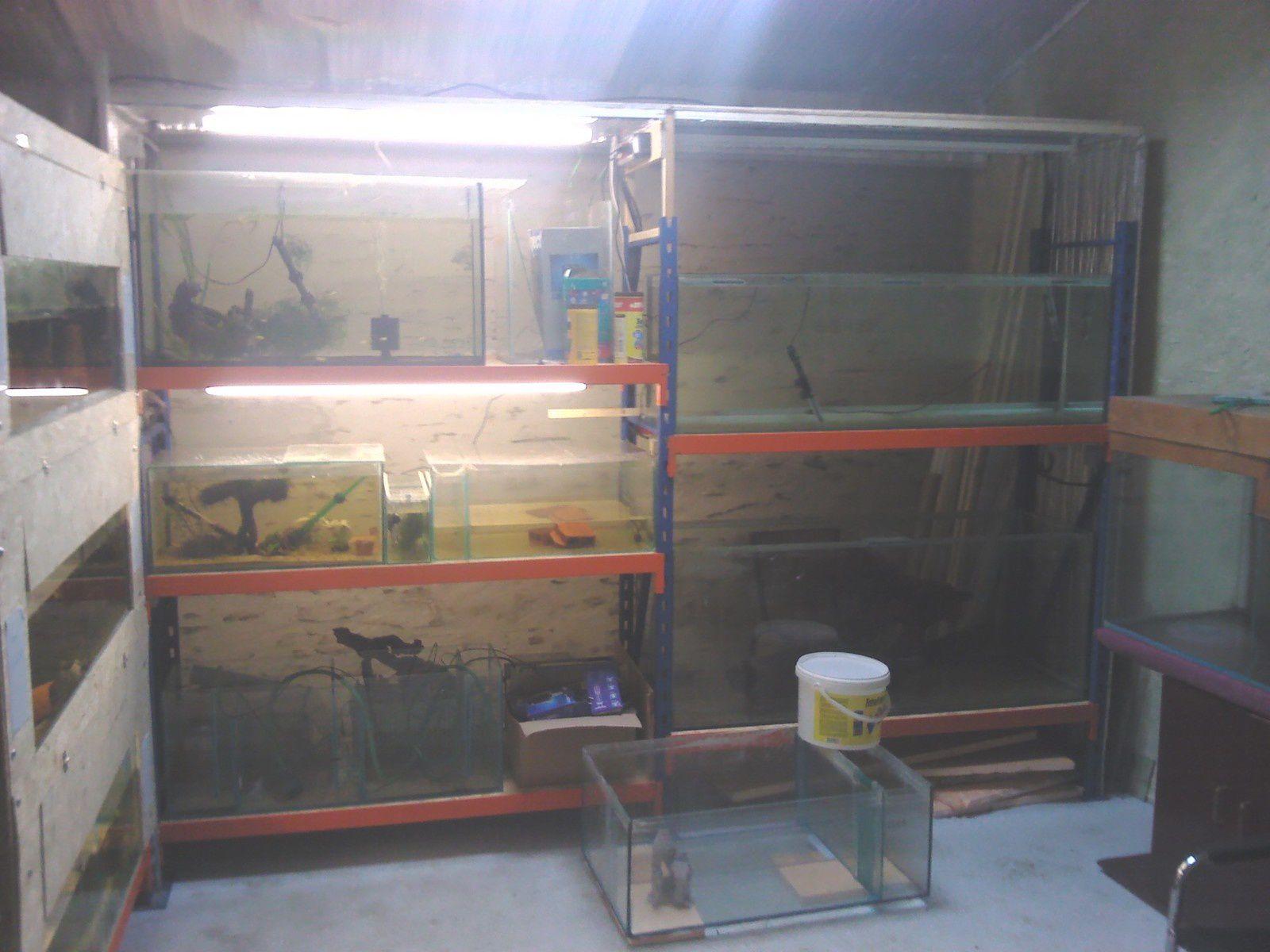 La fishroom