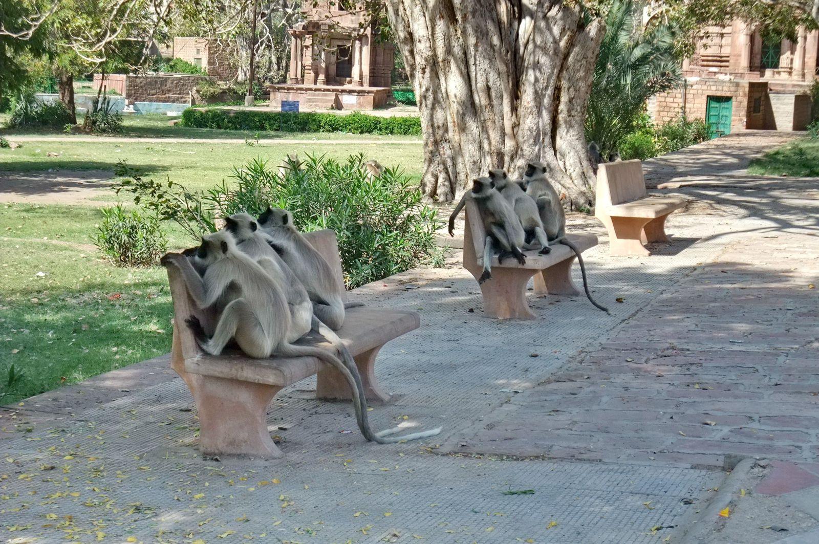 Jardin de Mandore  - Jodhpur - Inde - THE THREE WISE MONKEYS