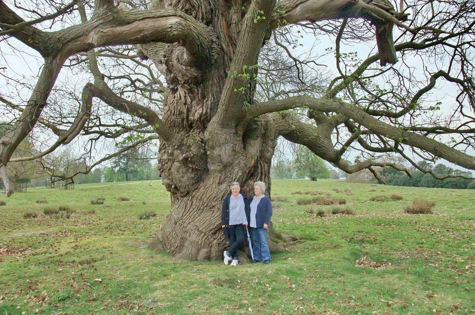 Petworth Park, Tillington, Wetrs-Sussex England