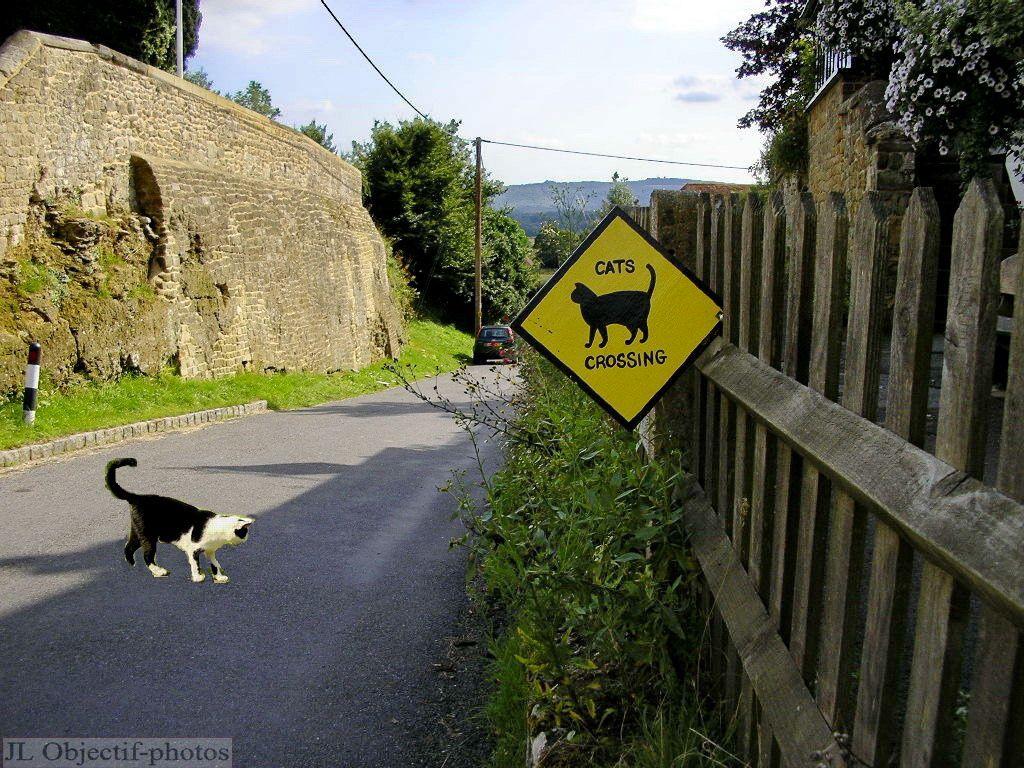Tillington, West-Sussex- England, Cat crossing
