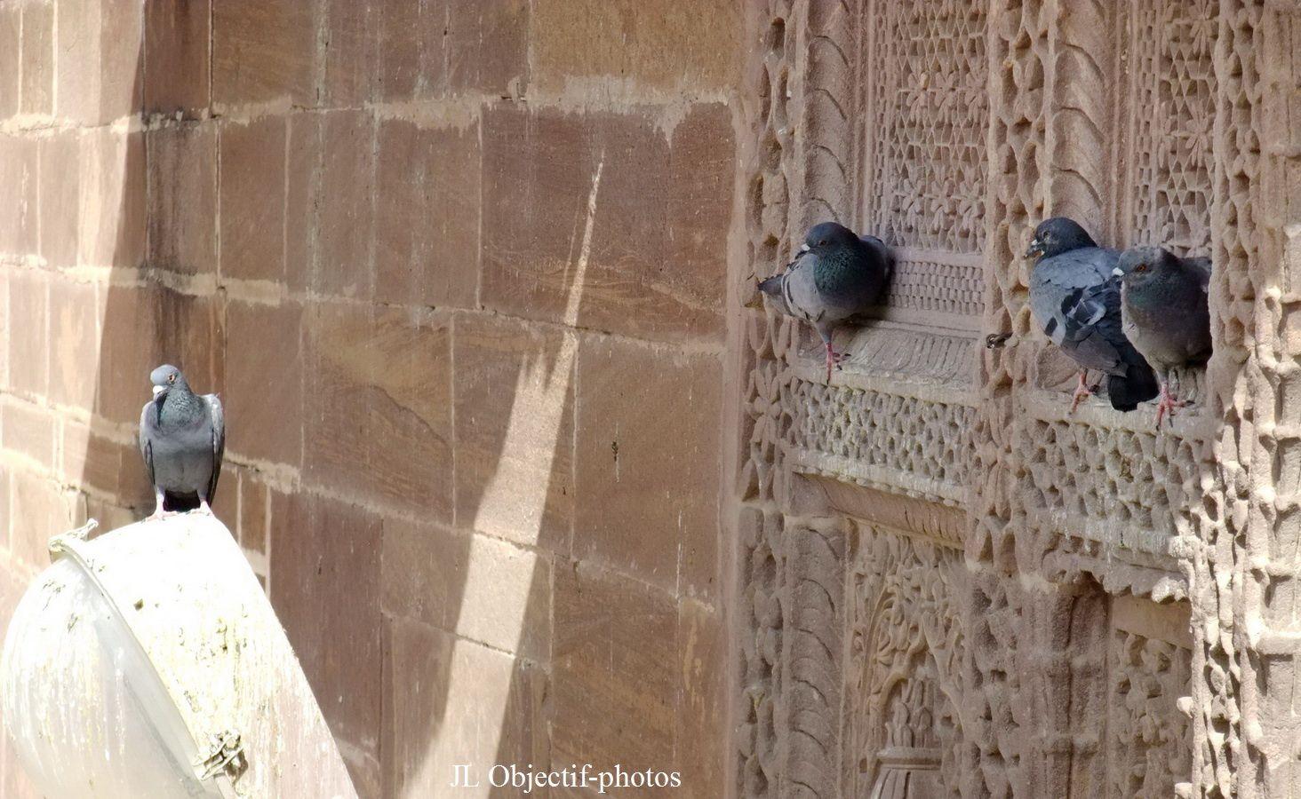 Mehrangarh Fort Jodhpur Rajasthan India. Fort Mehrangarh Jodhpur Rajasthan Inde