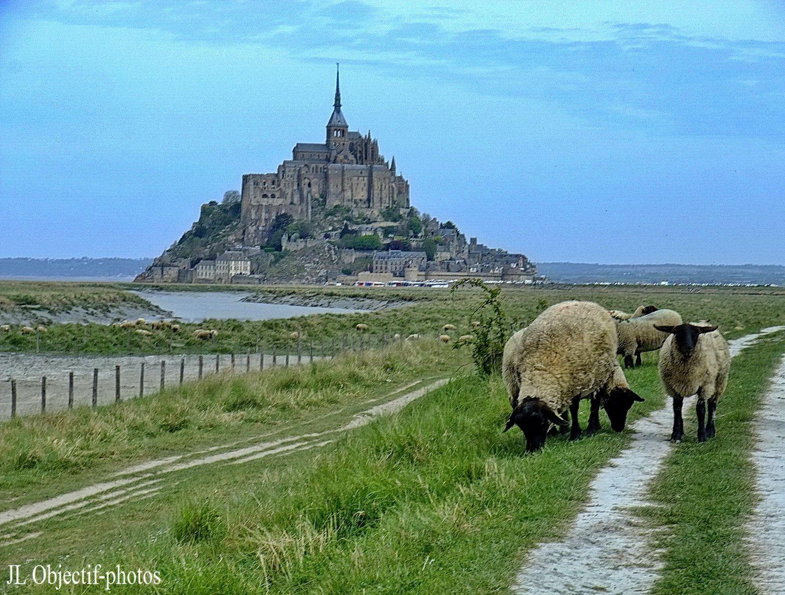 Mont St Michel Normandie, France, Basse Normandie, Manche, l'approche convivial - AVRIL 2010