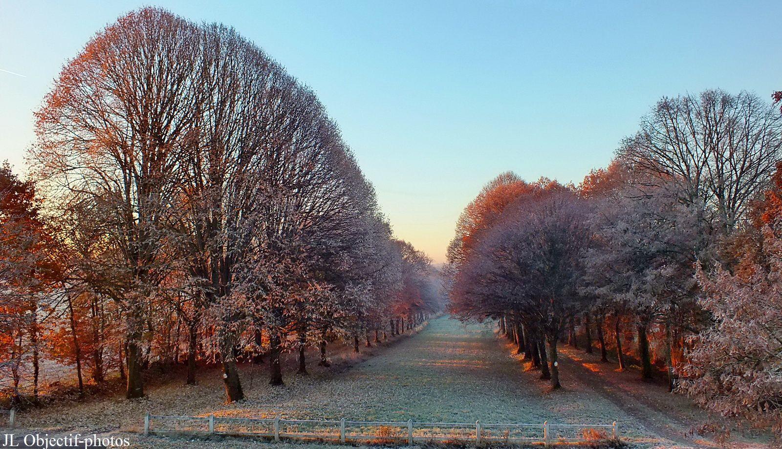 Allée de tilleuls dans la gelée du matin - Lime trees in the morning frost