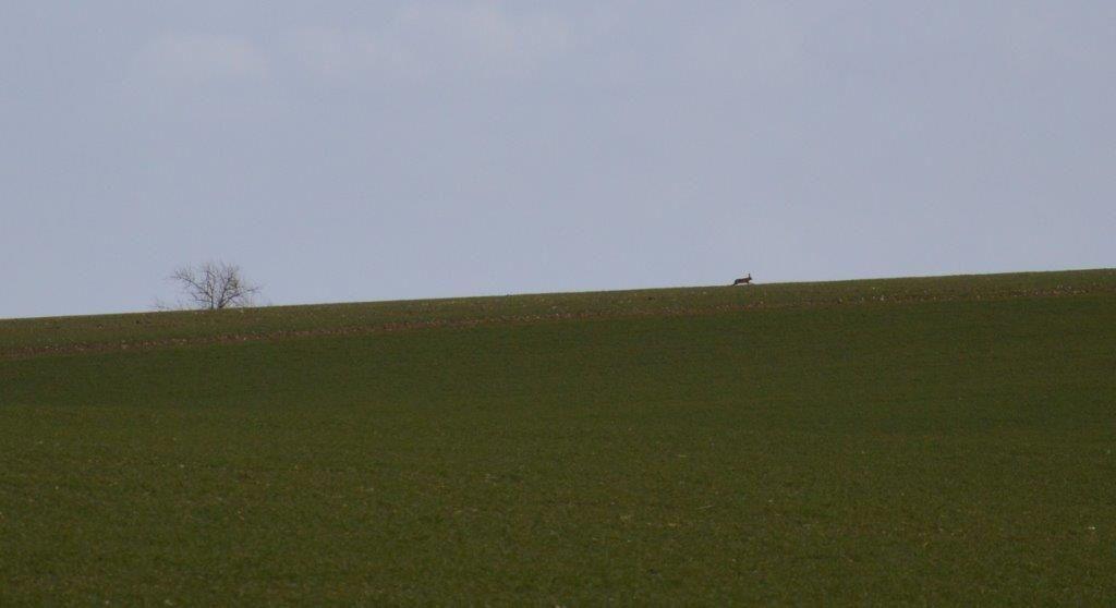 Les archers dans la plaine de Campeaux