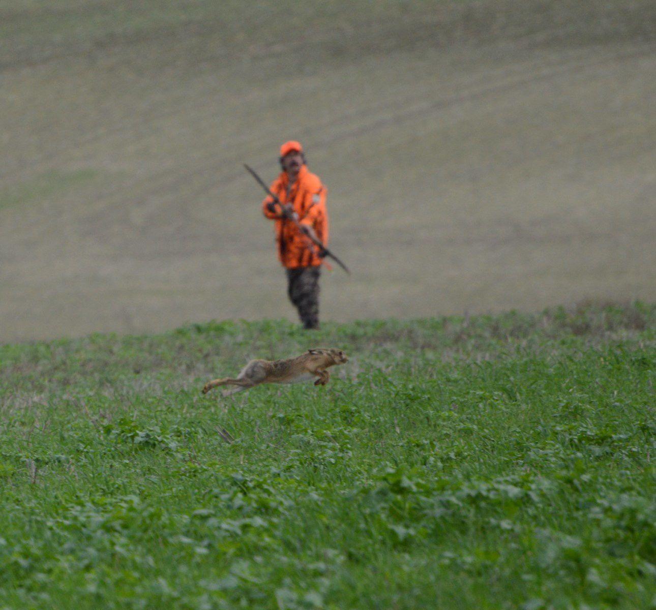 Chasse à l'arc aux lièvres dans la Somme