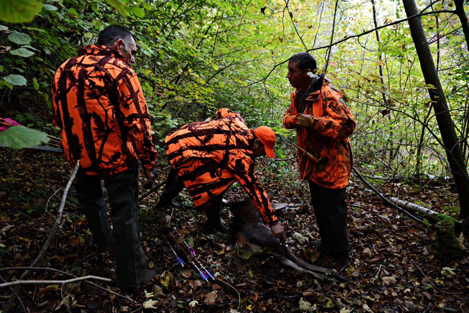 Ouverture chasse à l'arc au Bois Saint Denis