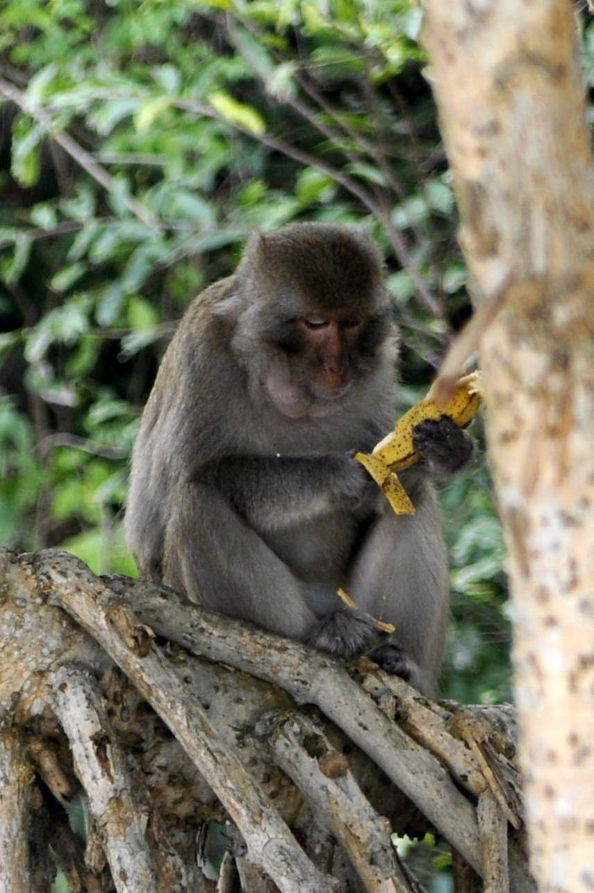 Monkey Island dans la Baie d'Halong