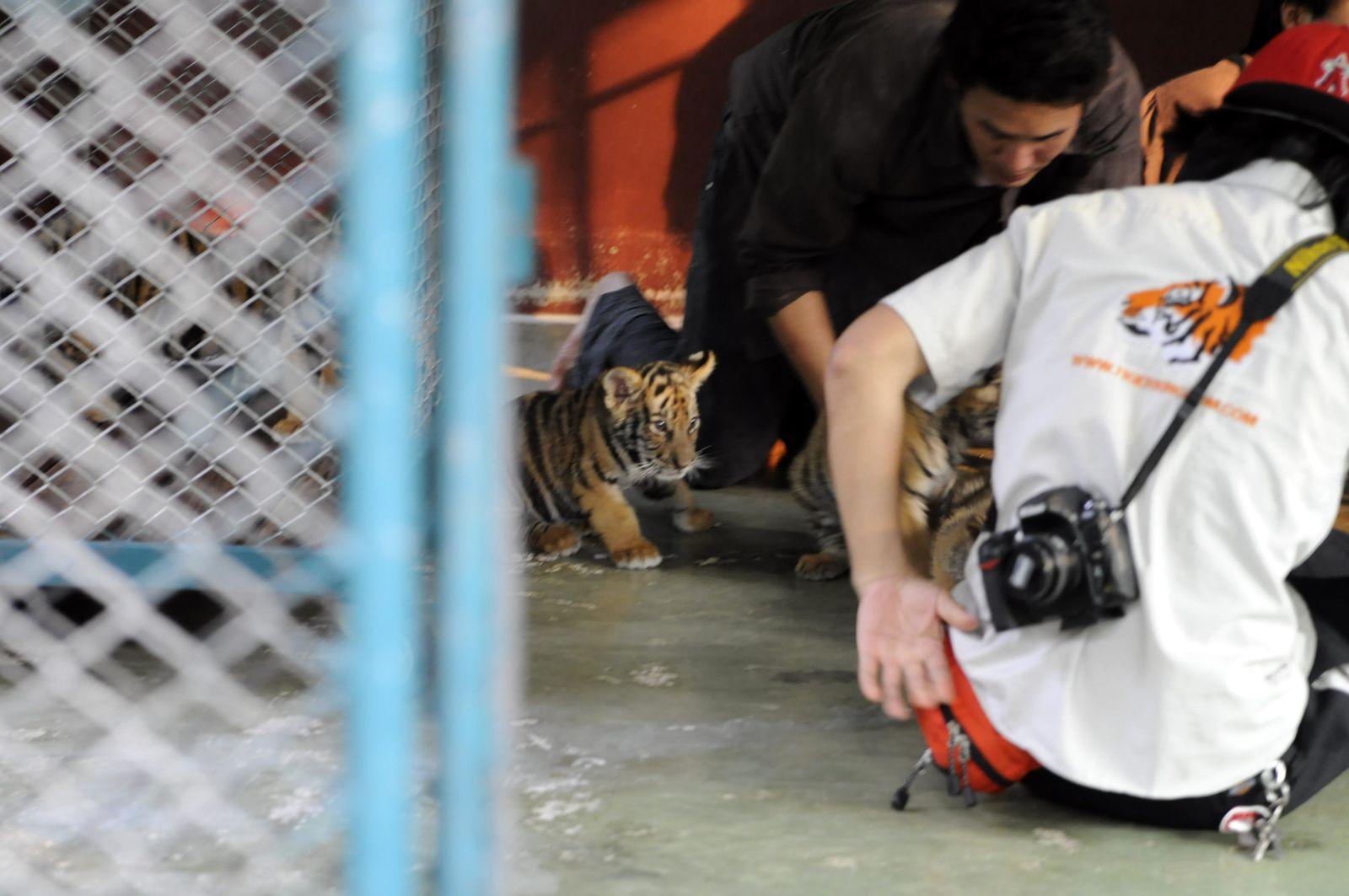 Au royaume des tigres