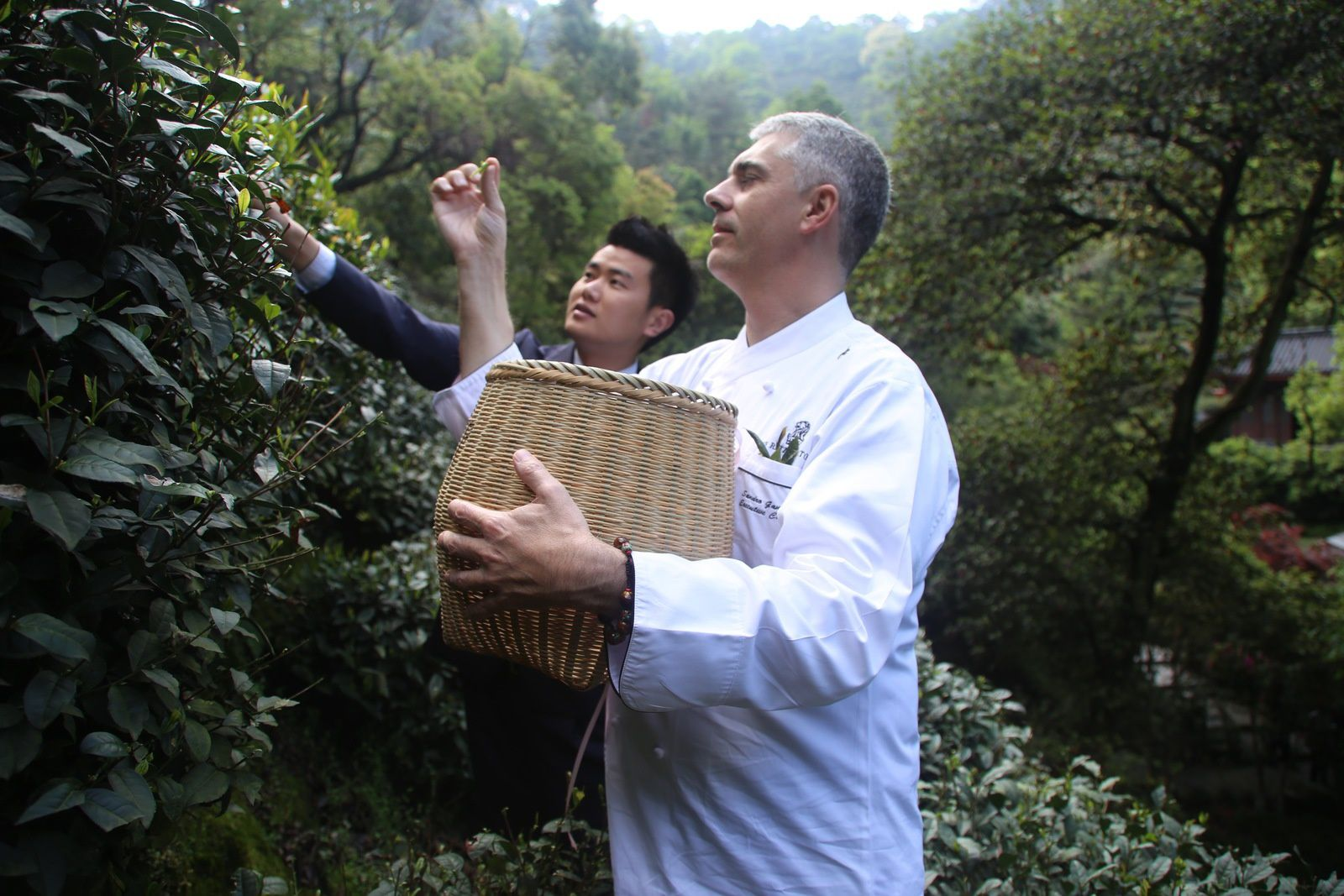 The Chef looking for the best Green Tea Leaves in China