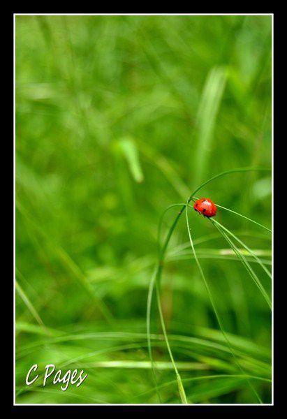 Dans le monde des insectes