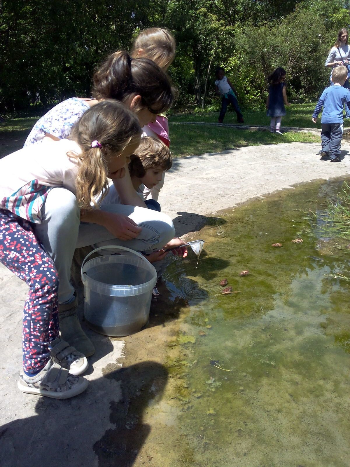 tadpoles with moyenne section