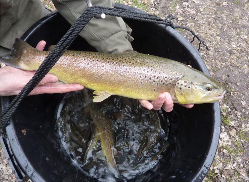 Ouverture de la pêche à Neuville en 1ère Catégorie