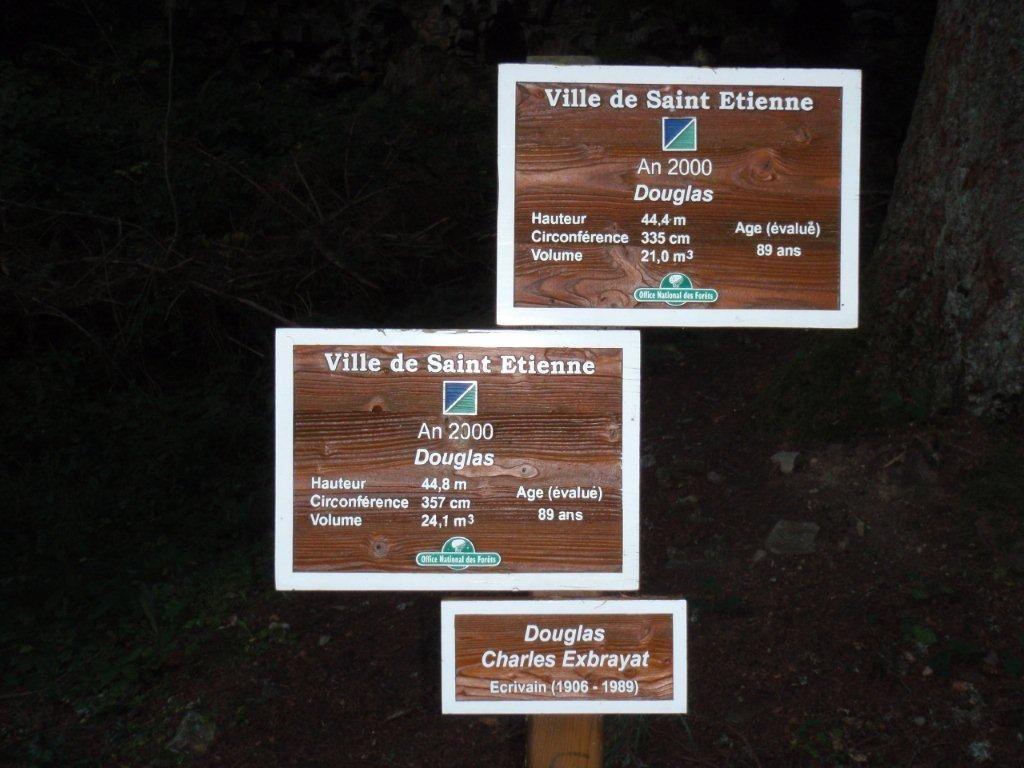 Douglas &quot&#x3B;Exbrayat&quot&#x3B;, Forêt de la Ville de St Etienne