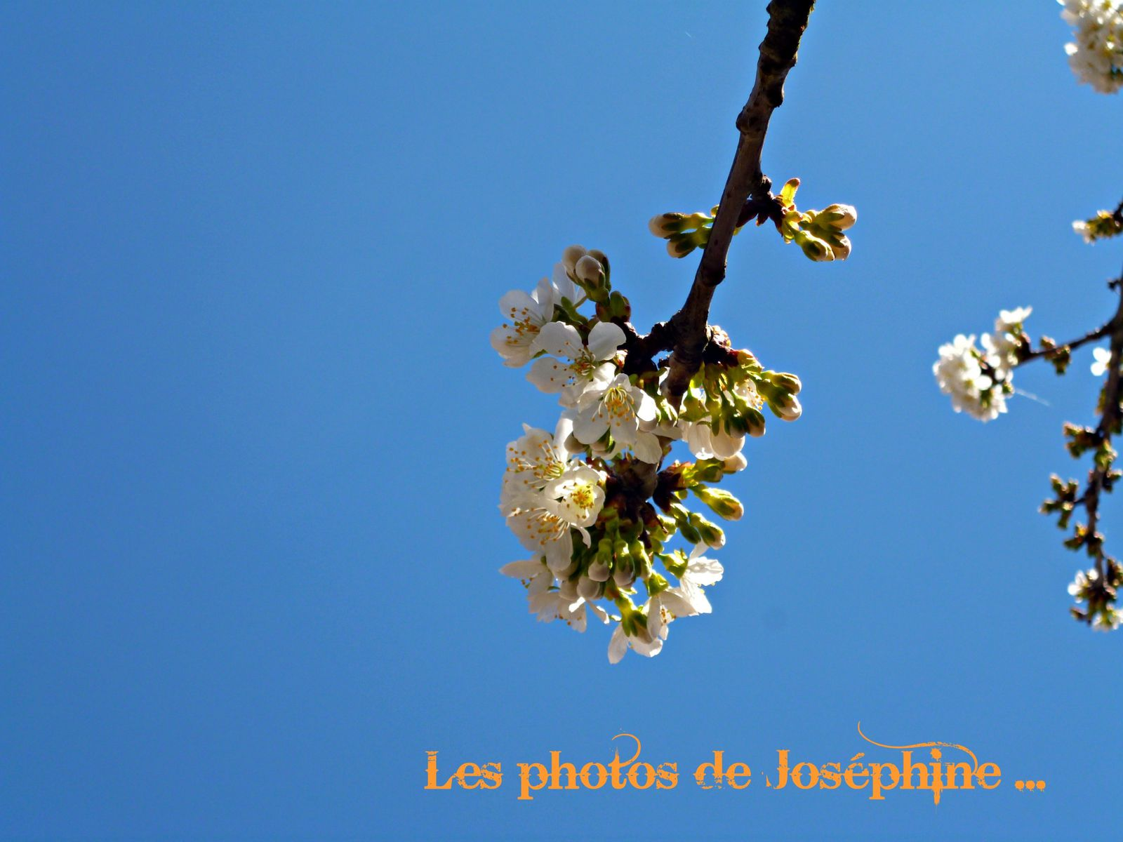 un petit air de printemps...