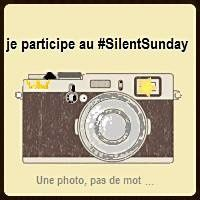 Silent Day #52
