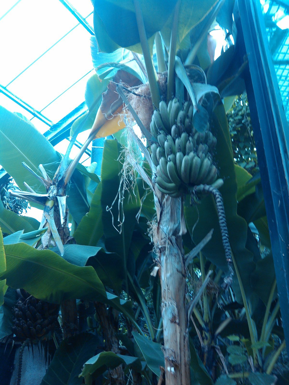 Les serres tropicales