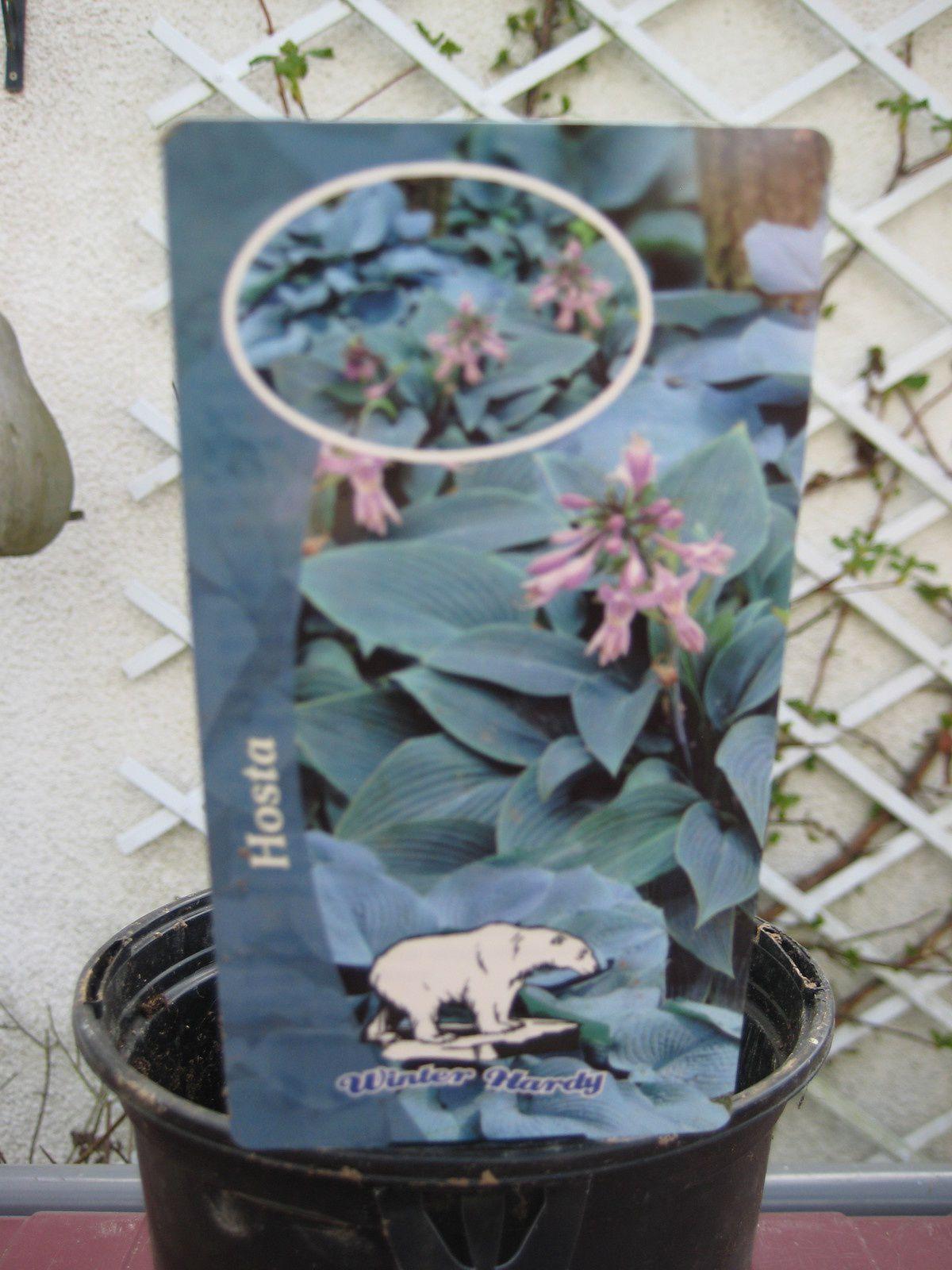 Première fête des plantes !