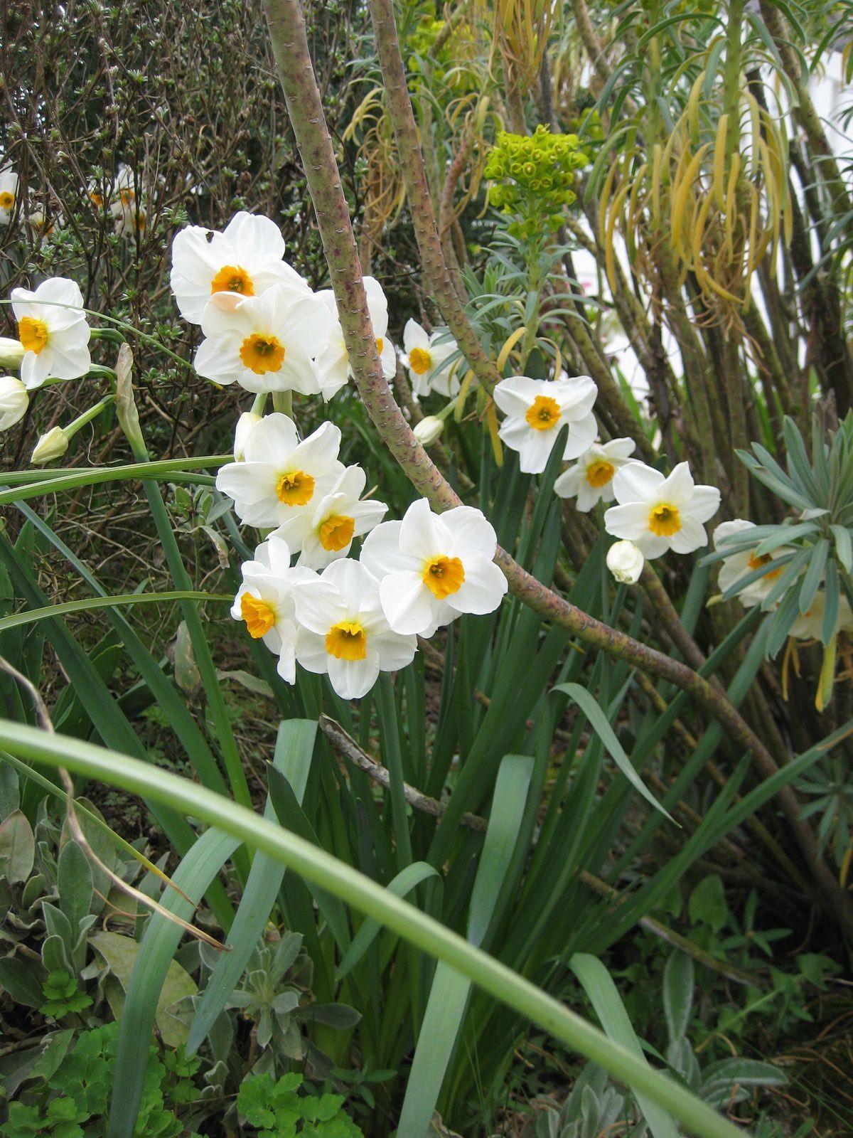 Ô beau Narcisse !