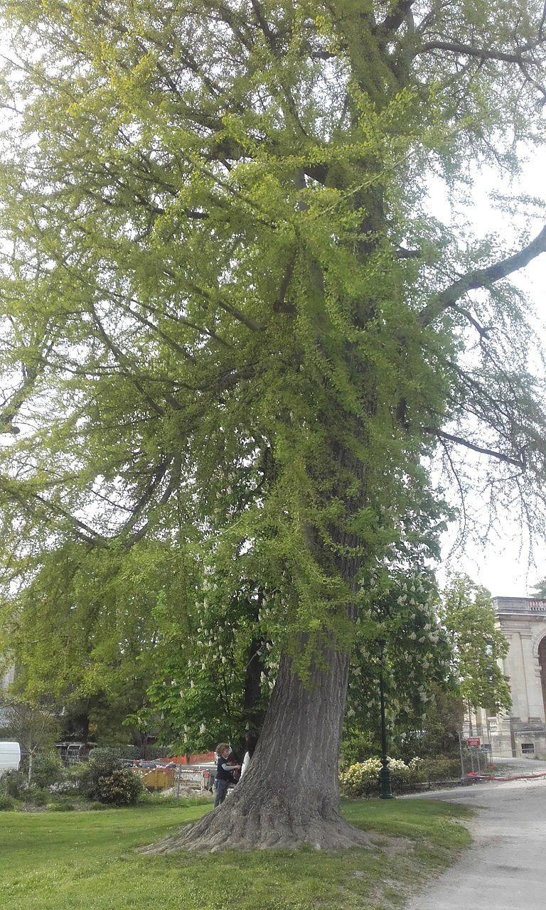 Comme c'est agréable de se promener au beau milieu de ces arbres centenaires et de ces massifs à thèmes.