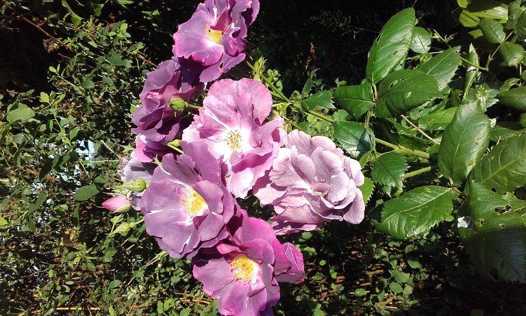 Rhapsody in blue et Alphonse Daudet