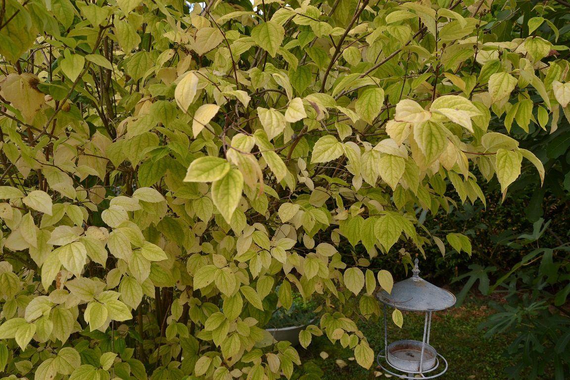 Premières couleurs d'automne