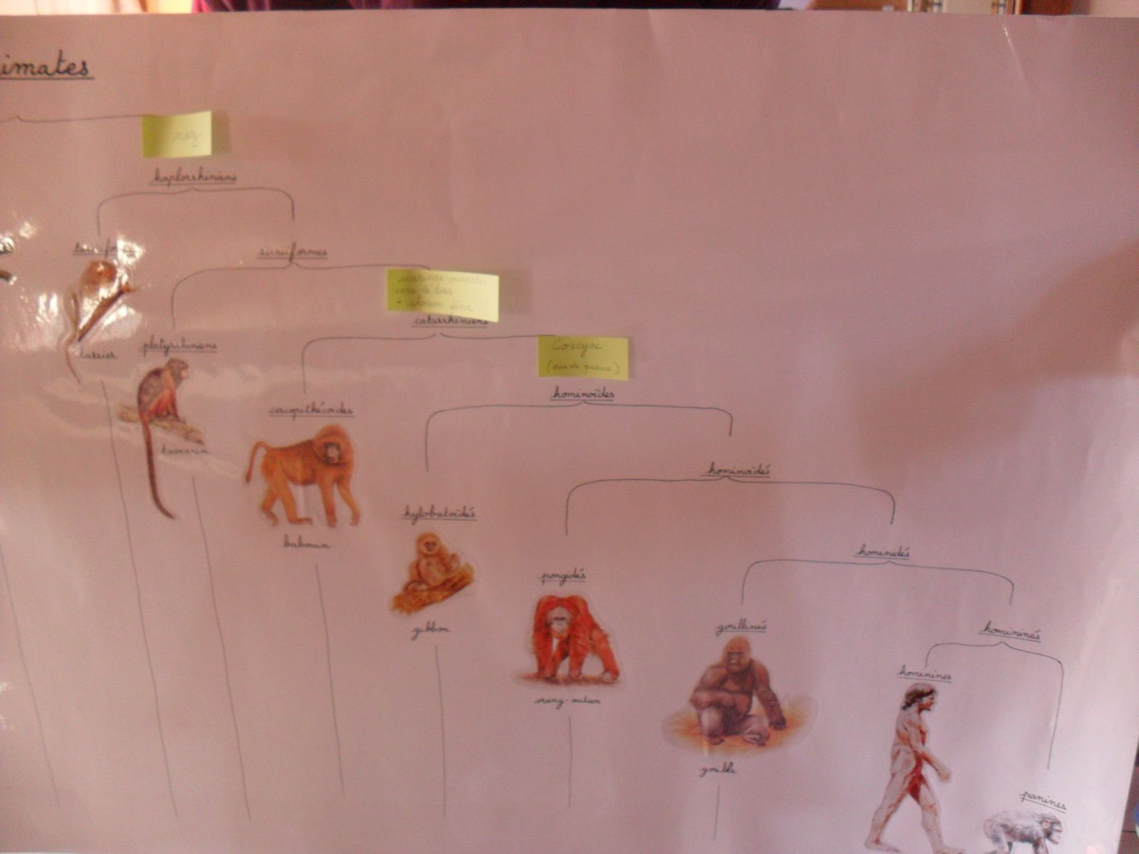 Le troisième grand récit Montessori