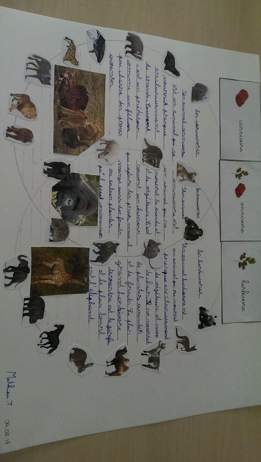 Mathieu a voulu rajouter les définitions de carnivores, herbivores et omnivores. Il a recopié les définitions présentes sur les documents de Boutique Documents Montessori.