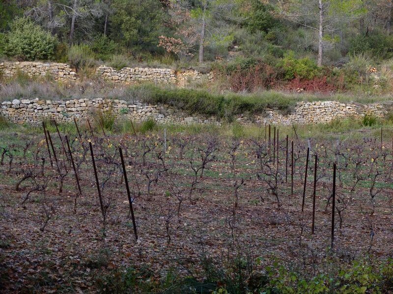 Les vignes et les restanques