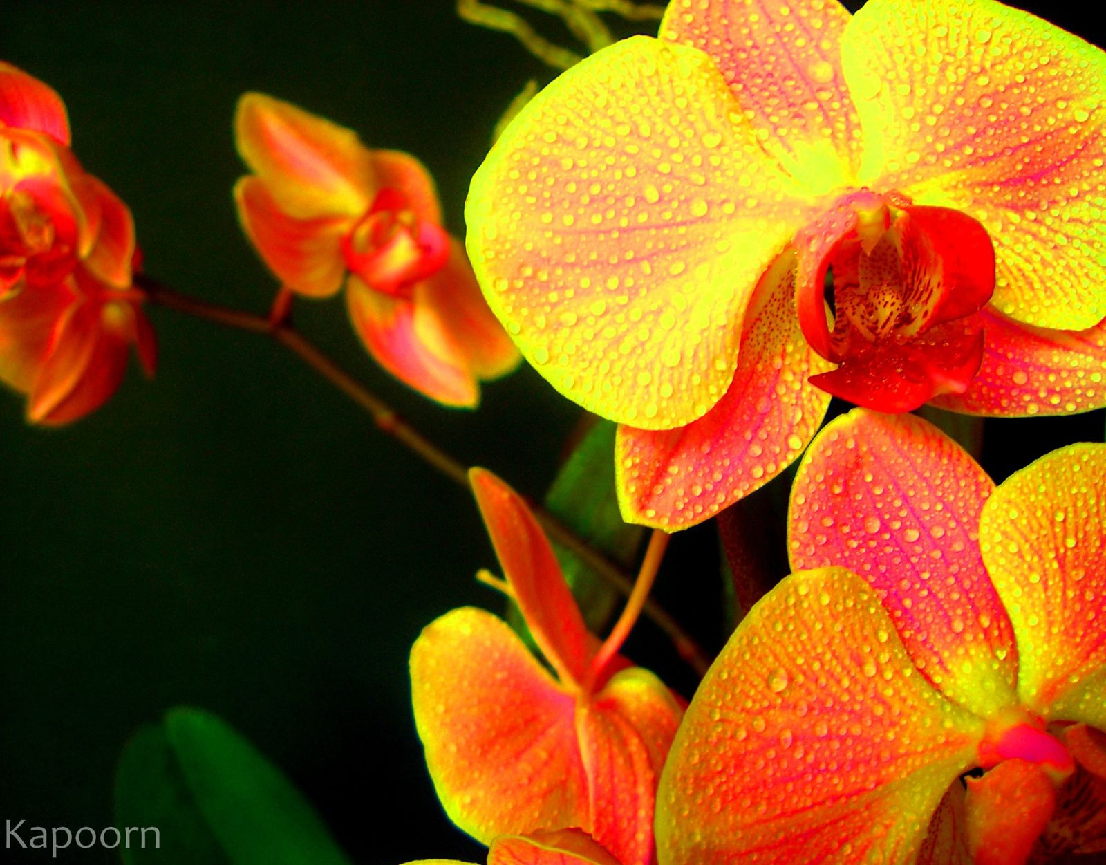 ob_ceb679_kapoorn-photographie-psychedelic-nature-psychedel