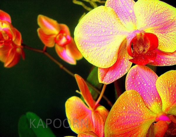 Photographie : La nature est psychédélique (orchidée - fleur de cactus)