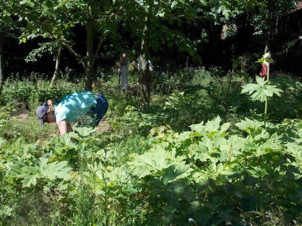 Le jardin renaissance du ch teau de lutzelbourg for Jardin renaissance