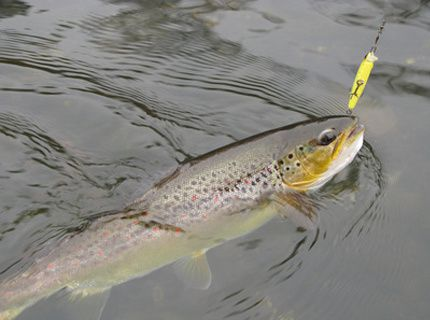 leurre truite de riviere