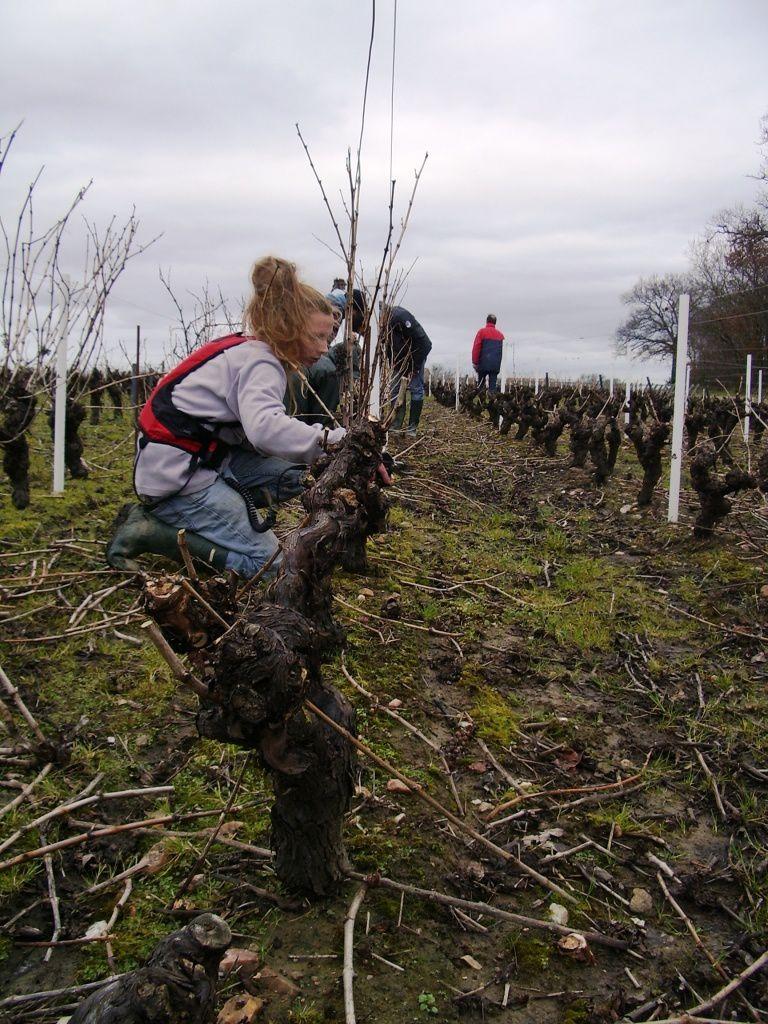 Formation pratique en viticulture